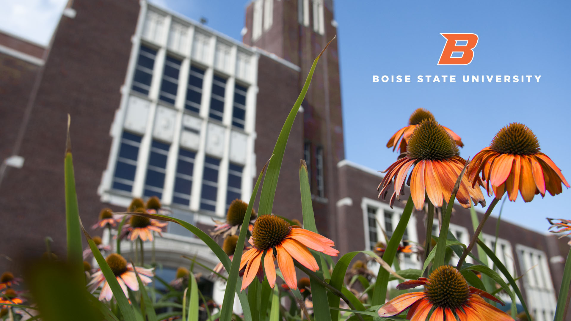 Boise State Admin Building and Wild Flowers Wallpapers