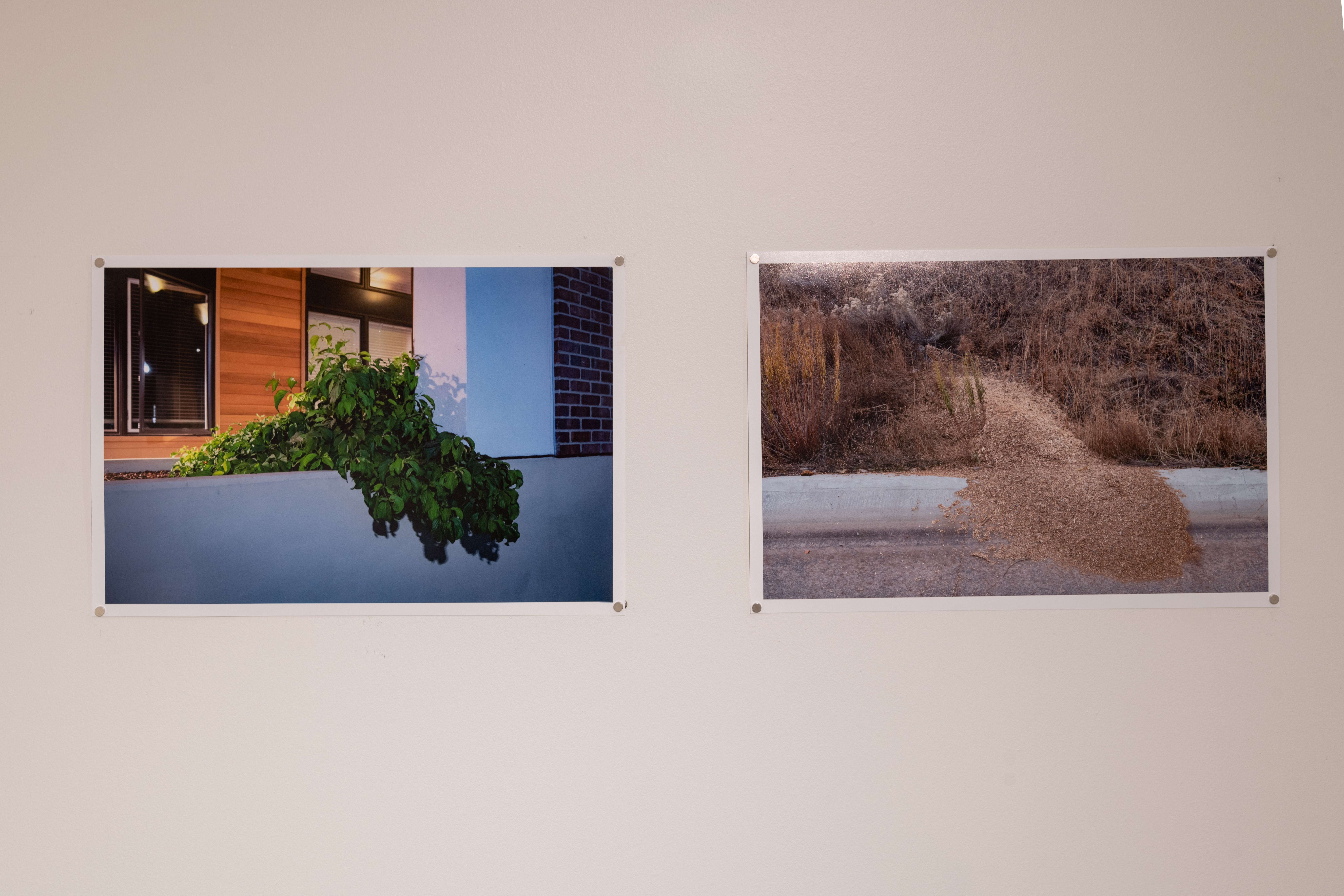 Gallery installation of Untitled 14 small prints showing 2 photos, left image shows greenery climbing over a white wall, right image shows brown wood chips creeping out of a brown, weedy area.