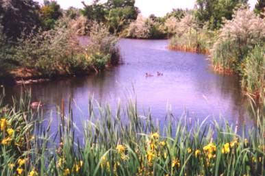 river at Kathryn Albertson Park