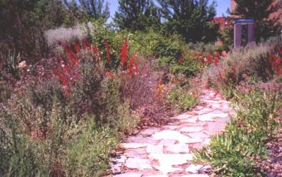 Native Plant garden path