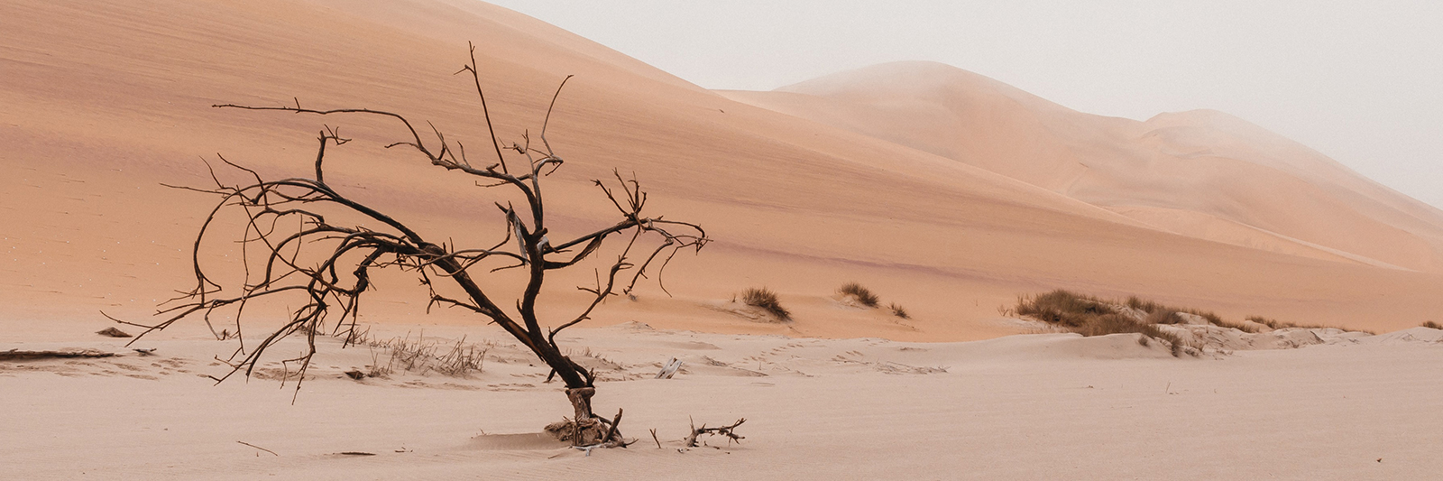 shrub in desert