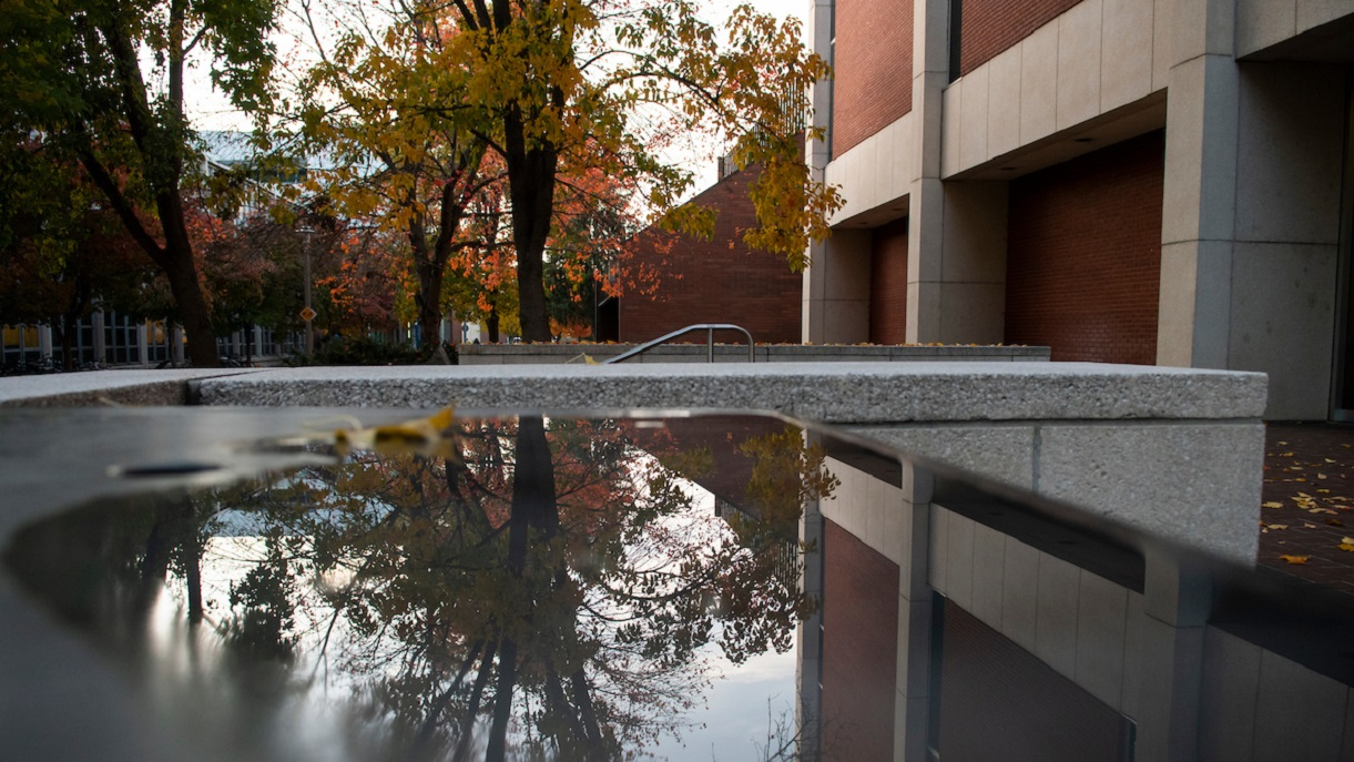 Photo of a tree on campus and it's reflection in a puddle of water.