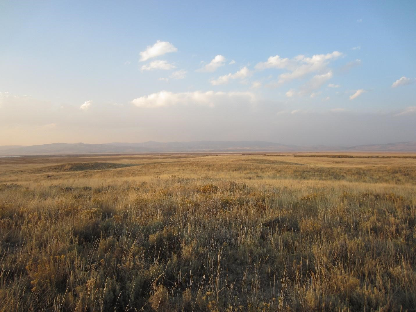 Rangeland extending out to the horizon at sunset in Fall with foothills in the distance