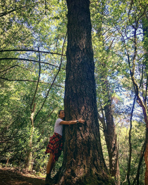 woman hugging large tree in a forest