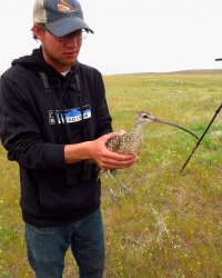 Jeremy Halka holds a Long-billed Curlew