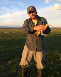 Jay holding a Long-billed Curlew