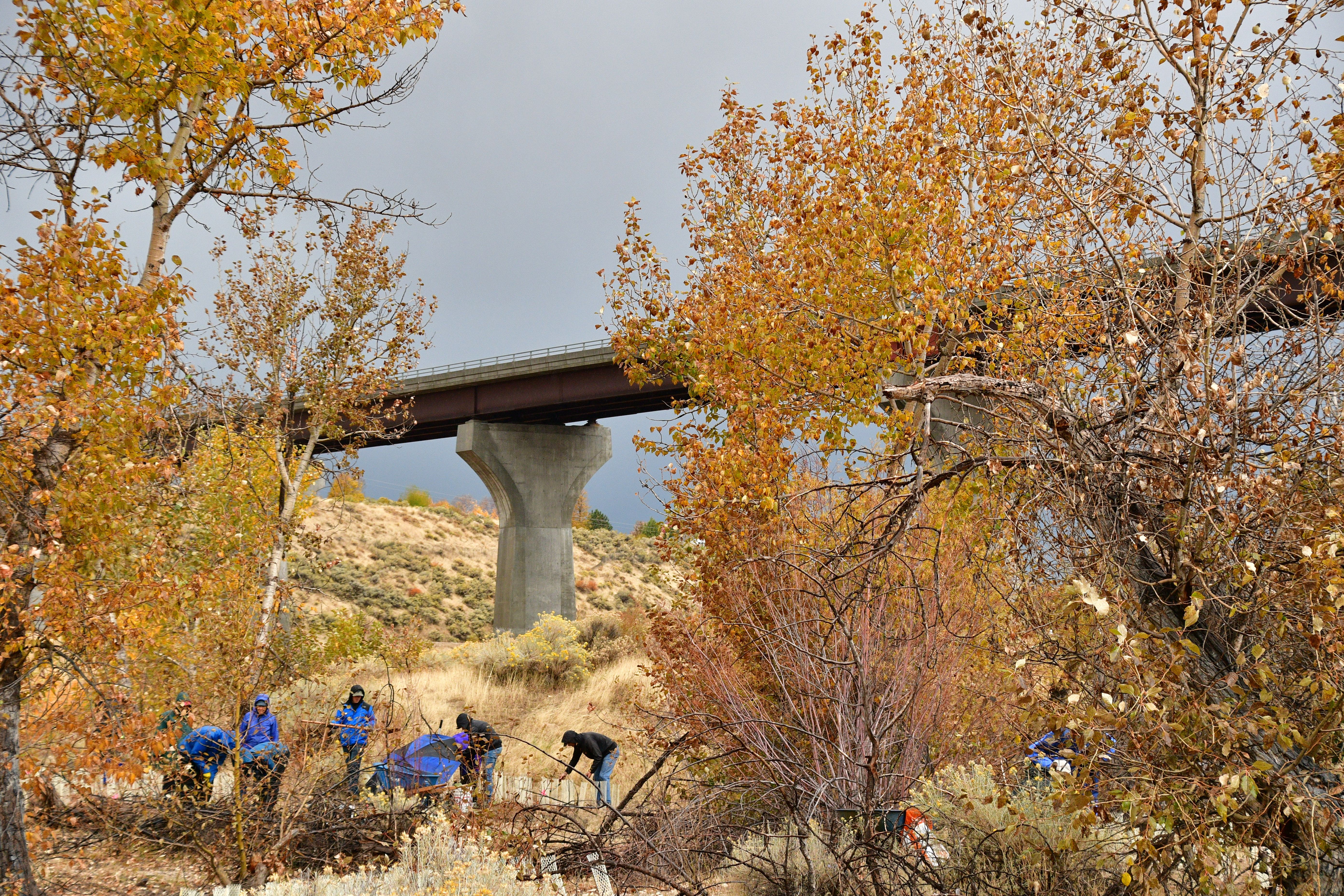 a scattered group of people stand underneath cottonwood trees with yellowing leaves. They are reaching down planting plants. The highway 21 bridge is in the background