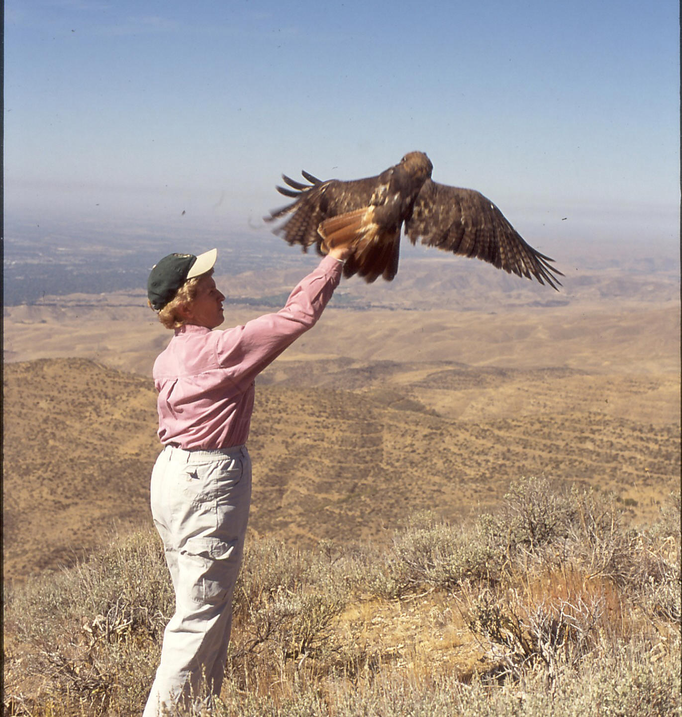 Carol reaches her arm out as a hawk takes flight from her hand