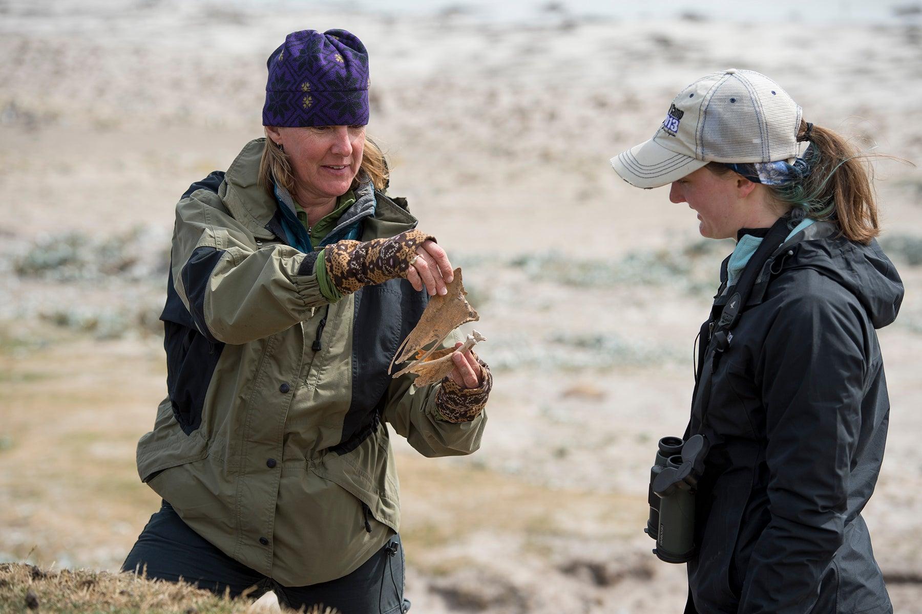 Falkland_019