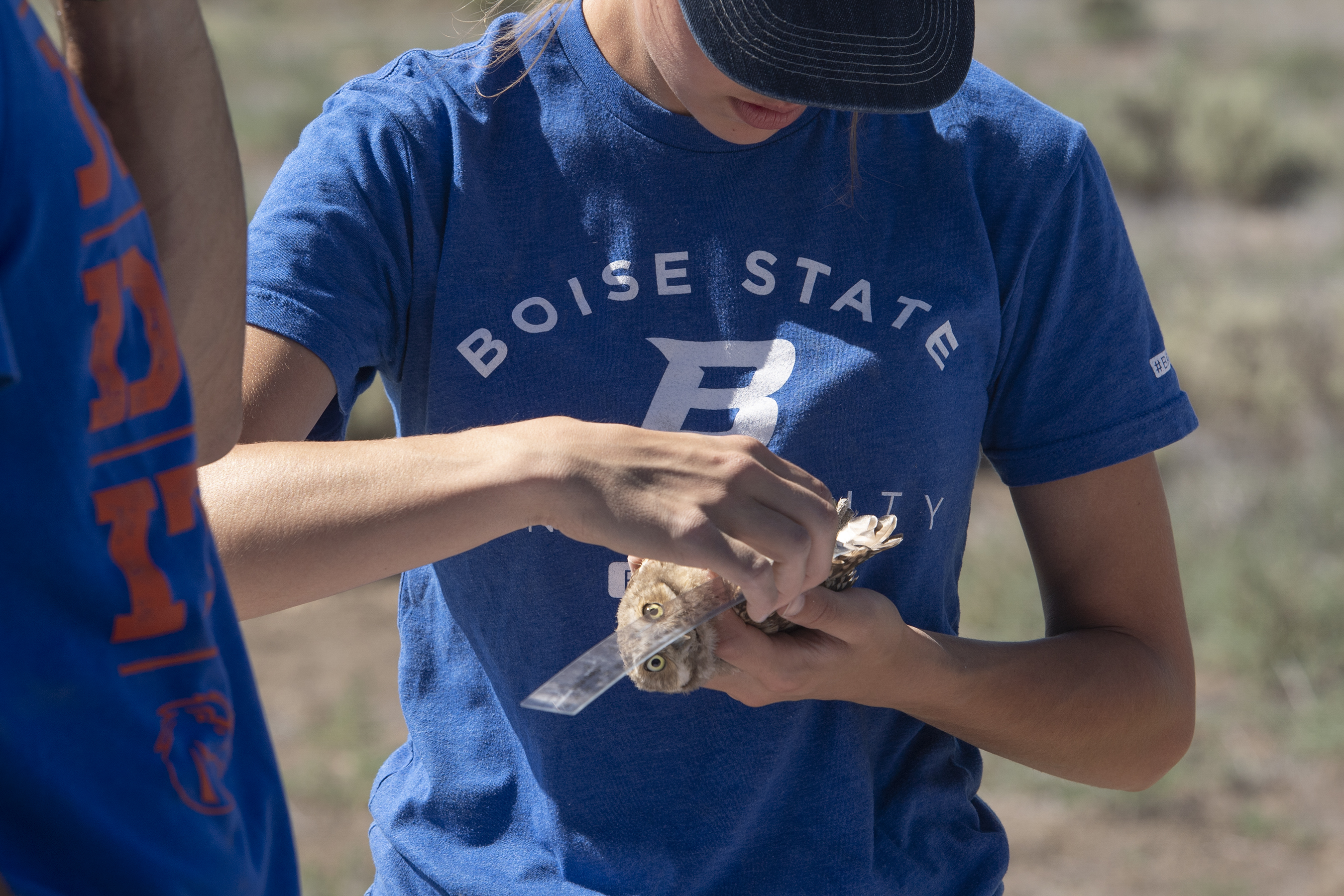 Student measures length of burrowing owl