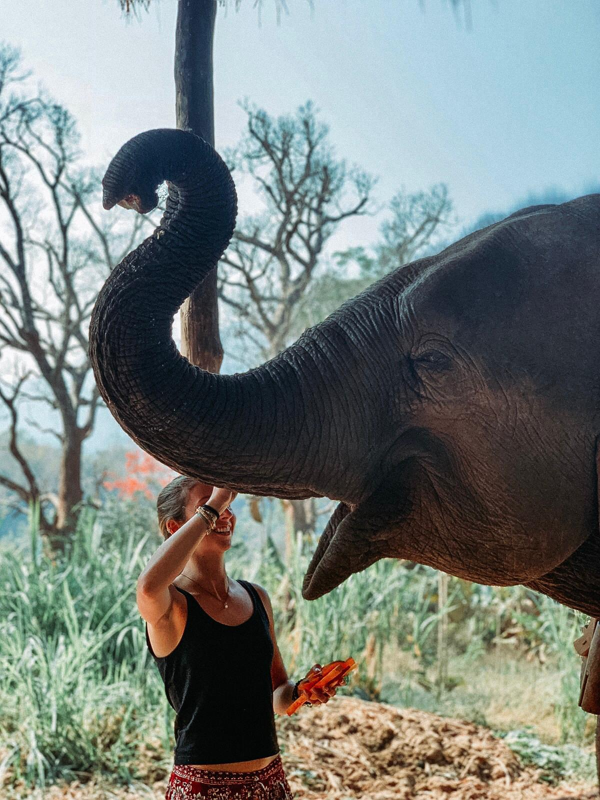girl pats elephant's trunk