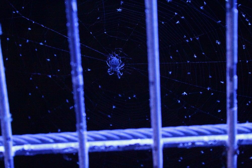blue-lit spider climbs between metal rungs