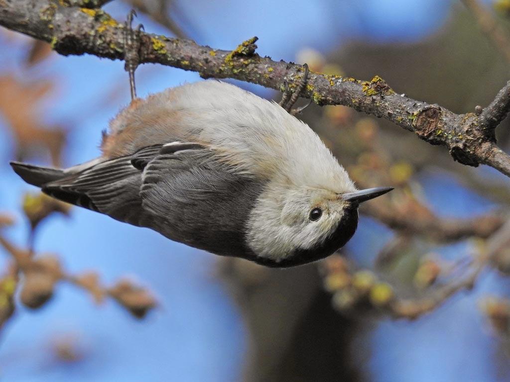 bird upside on branch