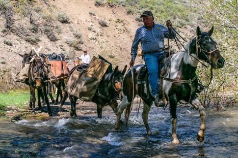 man on horseback leads pack horses across creek