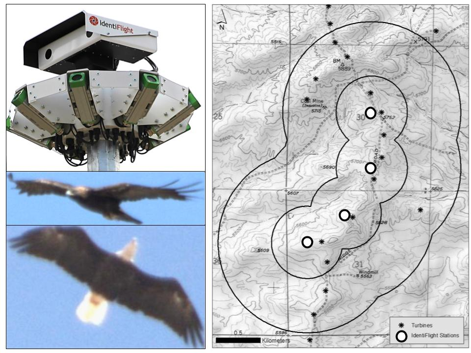 Collage showing the IdentiFlight telemetry tracking station, two eagles in flight, and a topographic map overlayed with telemetry data from Boise State Research High Performance Computing