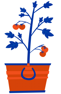 Illustration of a tomato plant