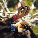close up of tagged bird talons