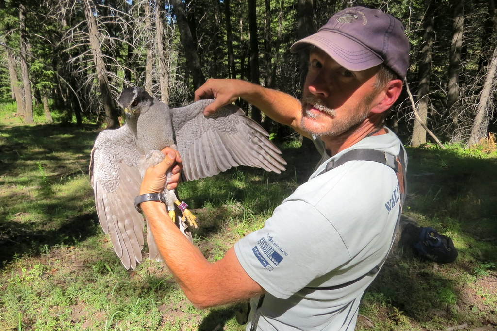 Rob Miller with a Northern Goshawk
