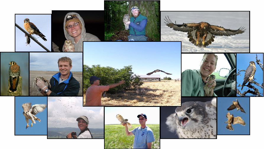 Collage of photos showing raptors, habitats, and students handling raptors in the field