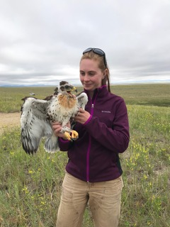 Ariana Dickson with Ferruginous Hawk Nestling in SE Wyoming