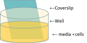 Diagram, well with media and cells and coverslip