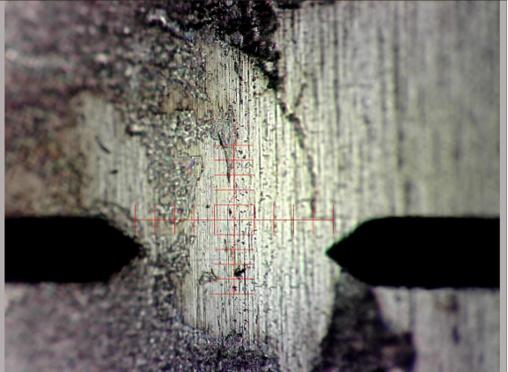 photo of edge where biofilm grew
