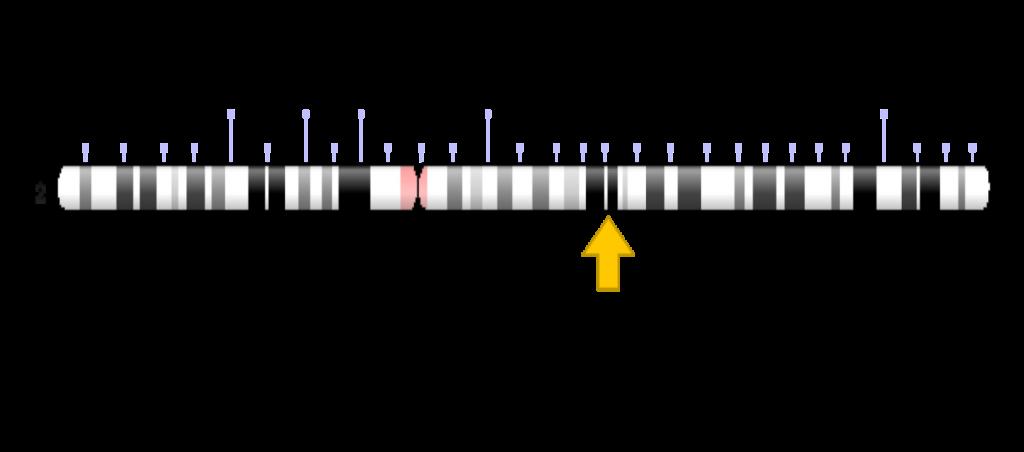 Chromosome, diagram