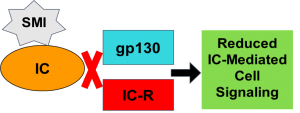 """A star representing a SMI bound to an orange oval representing the Inflammatory Cytokine (IC). A red X inbetween the IC and two parallel rectangles labeled gp130 and IC-Receptor, representing the IC unable to bind to the two receptors. Next, to the right, a black arrow pointing to a green square labeled """"Reduced IC-Mediated Cell Signaling."""""""
