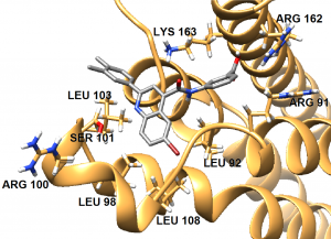 Image B has the structure of SMI-26 in grey overlaid on the binding site of the IC protein, which is shown in a ribbon model. Important Amino Acids are listed starting from the top of the protein and going around in circle clockwise: LYS 163, ARG 162, ARG 91, LEU 92, LEU 108, LEU 96, ARG 100, SER 101, and LEU