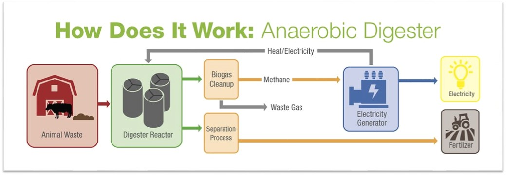 How does it work: Anaerobic digester? Animal waste added to digester reactor. Biogas cleanup produces waste gas and methane. Methane powers electric generator to produce electricity. Separation process produces fertilizer.