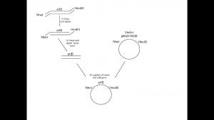 Constructive illustration of pLC001