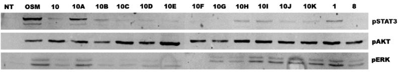 Figure 4, gel stain