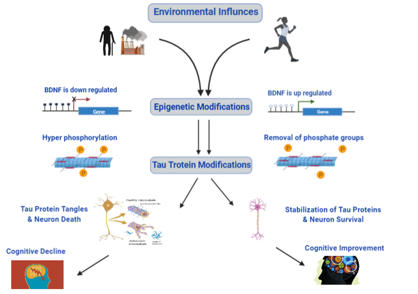Infographic for working disease model